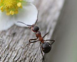 蟻 生態 夜
