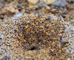 蟻 部屋 巣
