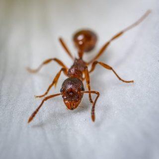 蟻 駆除 小さい 小さいアリの駆除は徹底的に!駆除だけでなく侵入防止の方法もご紹介 害虫駆除110番