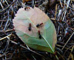 蟻 集まる 理由