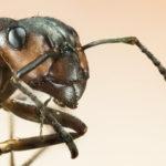 蟻を食べる動物って何がいる!?